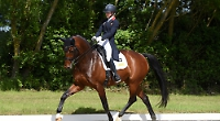 'Awful' dressage training mirrors plan amended