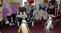 Penguins give care home residents a pppp-ick-me-up
