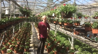 Garden centres and plant growers fight for survival