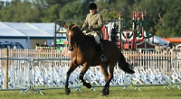 Horses stampede to new-look show