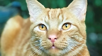 Four cats go missing in a year