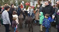 Vicar and donkeys lead Nativity procession