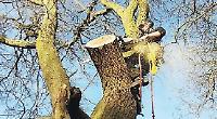 Tree surgeon enjoys living the high life