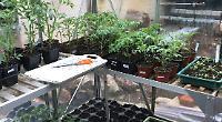Successful plant sale