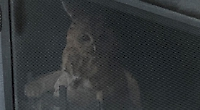 What a hoot... family find owl trapped in fireplace