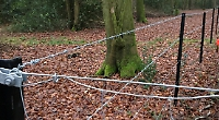Fencing raises fears for public footpaths in woods