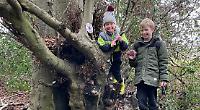 Beech tree turned into swap shop for lockdown walkers