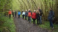 Woodland bluebells walk raises £100 for dementia day centre