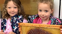Children enjoy visit from beekeeper