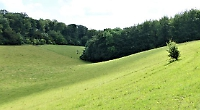 Peaceful and beautiful hillside meadows being reclaimed by nature