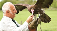 Static or flying, birds of prey will impress