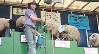 Dancing sheep and dog demonstrations