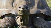 Meet friendly giants from Seychelles
