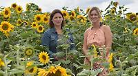 School raises £2,500 by people picking sunflowers