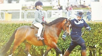 Semonella to ride at horse of year show