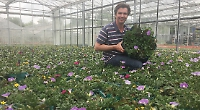 Hanging baskets campaign gathers pace