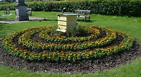 Beds planted with marigolds in celebration of honey bees