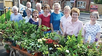 Gardening club raises £440 at sale of homegrown plants