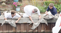 Swan population on the up with more cygnets on river