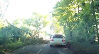 Storm Aileen brings down tree in Shiplake