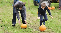 Roll, carve or paint them... anything goes at organic pumpkin festival