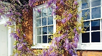 New lease of life for your sash windows