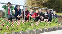 Pupils pay tribute with poetry and poppy crosses