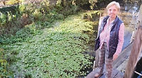 Invasive weed reaches Henley