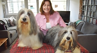 Dog owners groom their pets for glory at Crufts