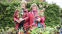 Village going for another gold in Britain in Bloom