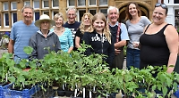 Tomatoes are pick of crop at market place plant sale