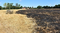 Student saves pedigree cattle from field blaze