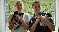 Builders rescue kittens from derelict restaurant
