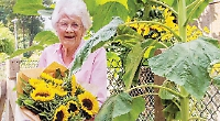 Woman, 91, wins guess the tallest sunflower contest