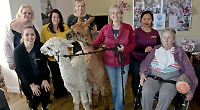 Care home residents enjoy visit by alpacas